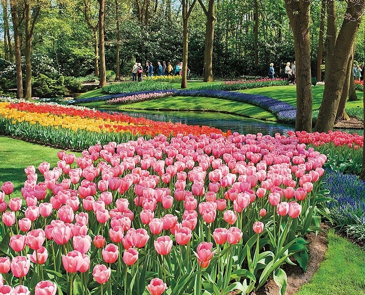 before-beatlemania-there-was-tulip-mania